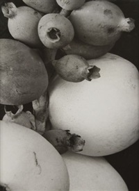 étude botanique - caprifoliaceae symphoricarpos - filicinae, asplenium nidus-farn (2 works) by albert renger-patzsch