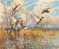greenheads on the rise by harry curieux adamson