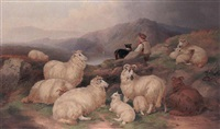 tending the flock by john charles morris