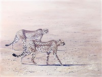 cheetahs by richard ward