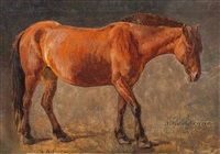 hesten nilse-bruno by anders monsen askevold