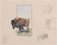 buffalo herd (set of 5) by olaf c. seltzer