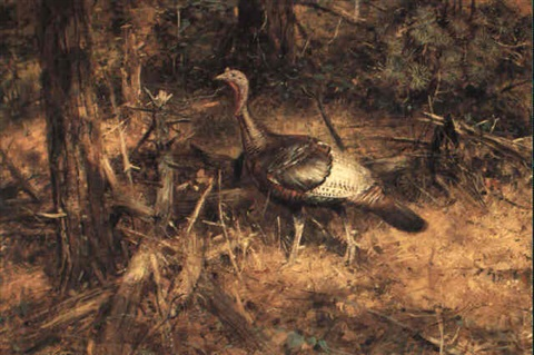 wild turkey by robert kennedy abbett
