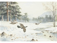 against the snow, capercaille by john cyril harrison