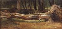 étude d'arbre abattu by théodore fourmois
