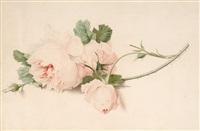rose by gérard van spaendonck