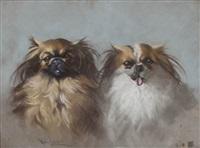cani by marino lenci