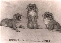 three portrait studies of a peke by w.j. ophelia billinge