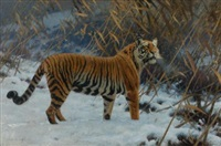 a tiger prowling in the snow by hugo ungewitter