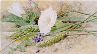 wheat and convolvulus by helen cordelia angell