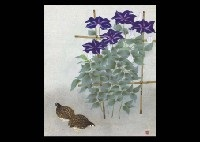 clematis by norikuni kawamura
