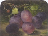 still life of plums with a cabbage white by benjamin roberts