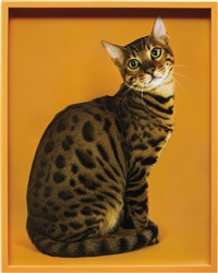 bengal by elad lassry