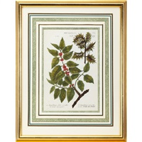 floral studies (from phytanthoza iconographia) (8 works) by johann wilhelm weinmann