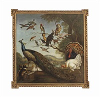 a bird's concert with aesop's fable of the stolen feathers by pieter casteels iii