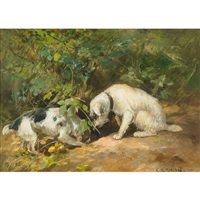 terriers on the hunt by cuthbert edmund swan