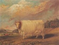 prize bull in landscape by j. blazeby