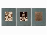 3 macro photographs (3 works) by albert renger-patzsch