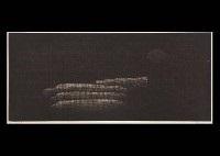corn by yozo hamaguchi