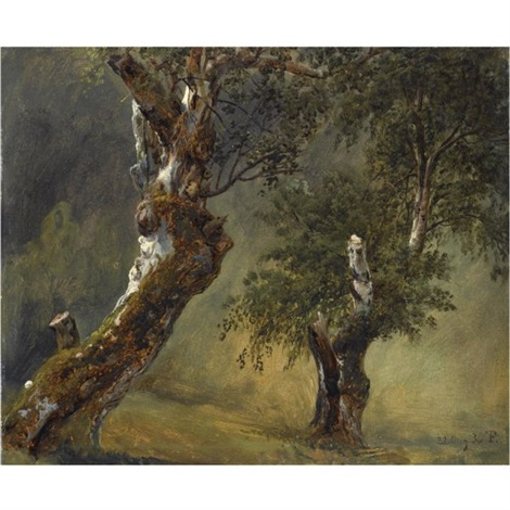 studie av trær study of trees by thomas fearnley