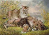 resting lions by william huggins