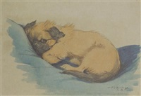 study of peke pub, 11 weeks old by w.j. ophelia billinge