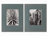 2 macro photographs (2 works) by albert renger-patzsch
