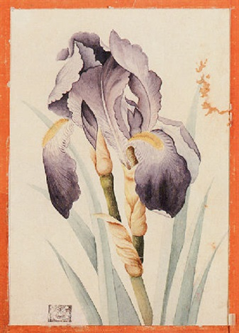 a purple iris by mohamed qazim