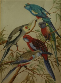 group of five parrots by neville william cayley
