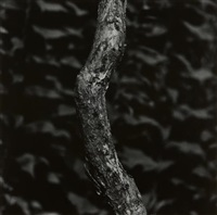 martha's vineyard by aaron siskind