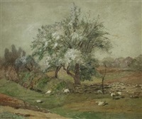 sheep in shade of flowering tree by edward b. gay