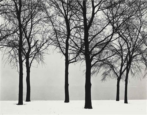 chicago trees at lake shore by harry callahan
