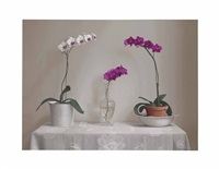 orchids on a table by renato meziat
