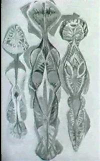 eclosion by suzanne rodillon