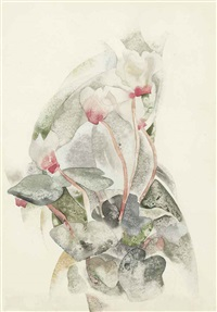 cyclamen by charles demuth