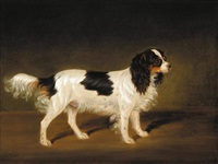 a tricolour cavalier king charles spaniel by james (of bath) loder