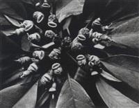 pflanzenbild by walter hege