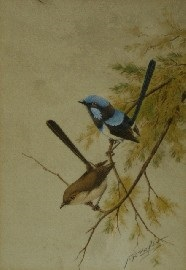 blue wrens by neville william cayley