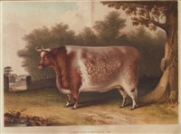 the trusthorpe ox, which gained the prize at the smithfield club cattle show, christmas by b. hubbard