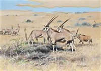 antelopes resting on a plain by wilhelm friedrich kuhnert