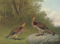 a pair of ruffled grouse beside a wood by howard l. hill