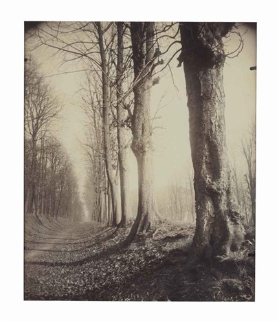 saint cloud allée du parc by eugène atget