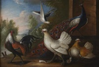 ornamental fowl in a garden by marmaduke cradock