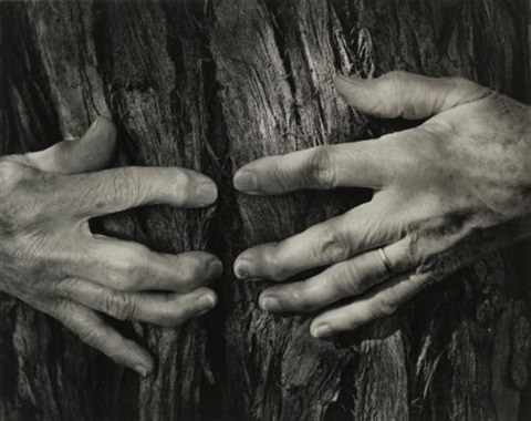 womans hands by wynn bullock