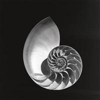 shell #1 by lynn davis