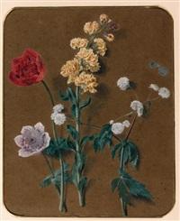 etude de fleurs, giroflées et anémones (study) by alexis nicolas perignon the elder