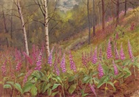 foxgloves among silver birch trees by david gould