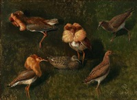 ruffs and chicken by niels peter rasmussen