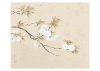 yae cherry blossoms by kyujin yamamoto