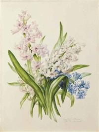 jacinthe rose, blanche et bleue by caroline adrien